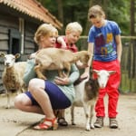 Vennenbos | Hapert, Noord-Brabant